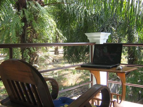 Фрилансер под пальмой