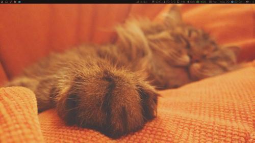 i3, мята, котики