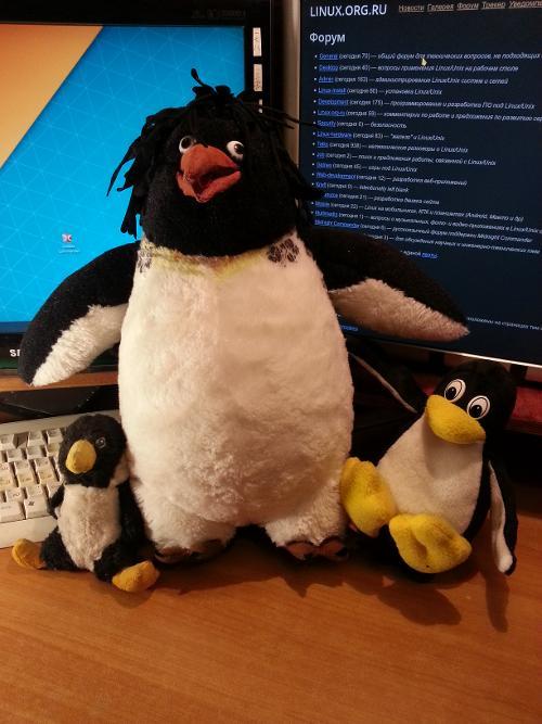 LOR, дай имя пингвину!