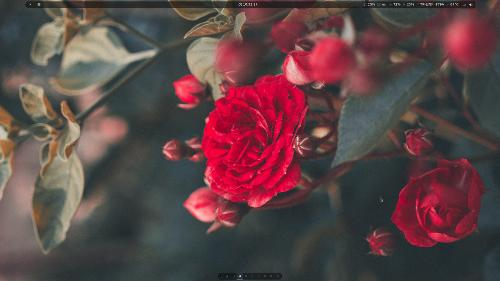 Марсианские розы