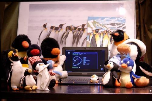 Считайте пингвинов. (:
