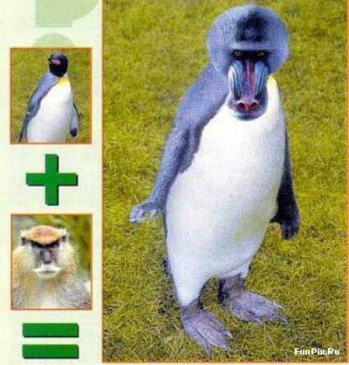 На тему пингвинов